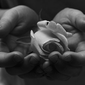 Child's_Hands_Holding_White_Rose_for_Peace_Free_Creative_Commons_(1535619818)
